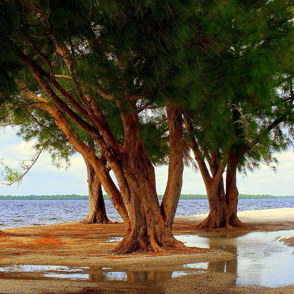 Landscapes Poster featuring the photograph Whispering Trees Of Sanibel by Karen Wiles
