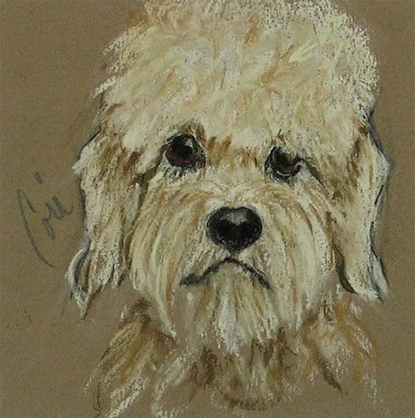 Dandie Dinmont Terrier Poster featuring the drawing Dandie by Cori Solomon