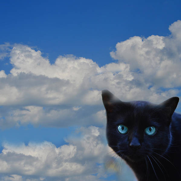 Cat Poster featuring the photograph Head In The Clouds by Ludmila SHUMILOVA