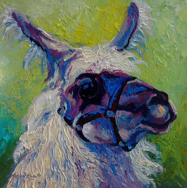 Llama Poster featuring the painting Lilloet - Llama by Marion Rose