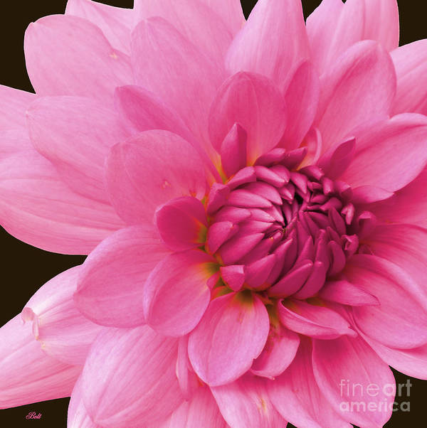 Floral Poster featuring the photograph Pink by Christine Belt