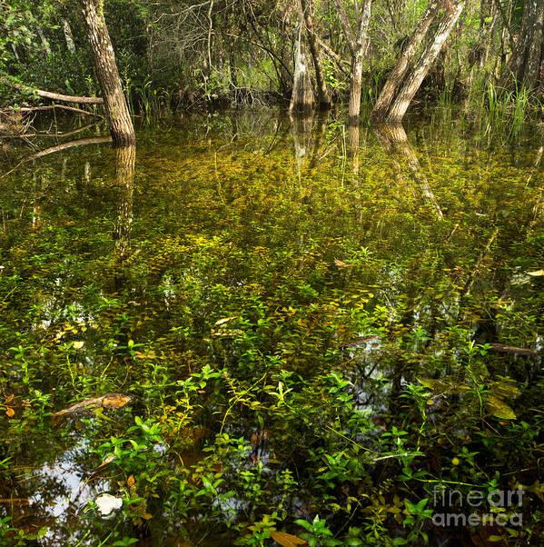 River Of Grass Poster featuring the photograph River Of Grass by Matt Tilghman