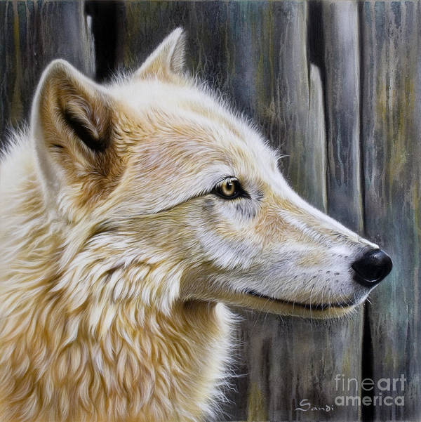 Wolves Poster featuring the painting Rose by Sandi Baker