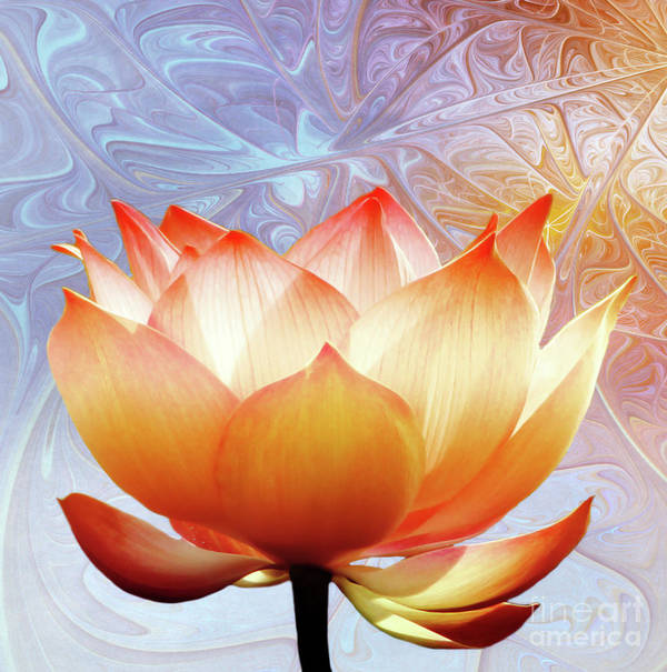 Lotus Poster featuring the photograph Sunshine Lotus by Jacky Gerritsen