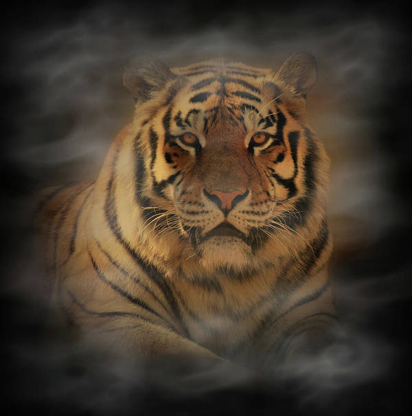 Tiger Poster featuring the photograph Tiger by Sandy Keeton
