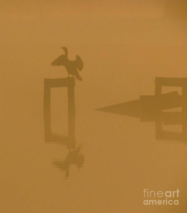 Nature Poster featuring the photograph Mist At Dawn 04 by Rrrose Pix