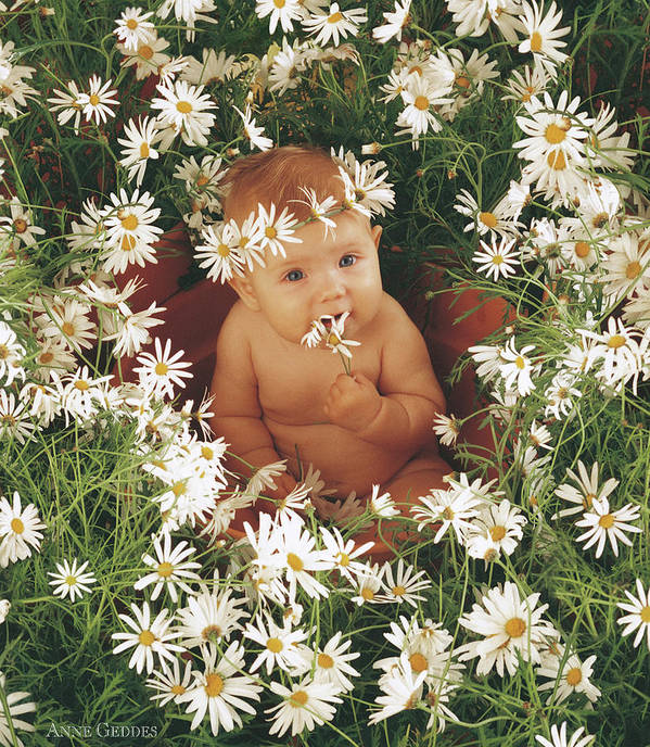 Daisies Poster featuring the photograph Daisies by Anne Geddes