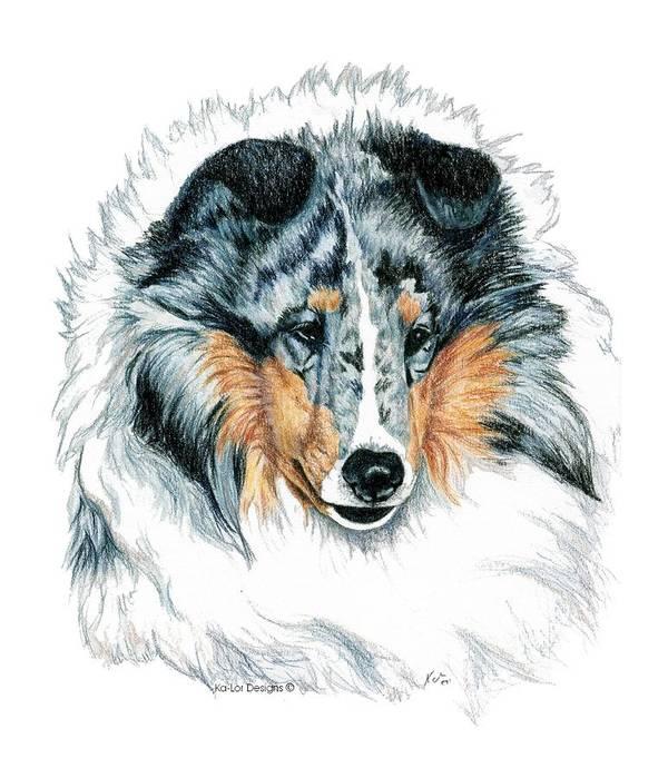 Sheltie Poster featuring the drawing Shetland Sheepdog, Sheltie, Blue Merle by Kathleen Sepulveda