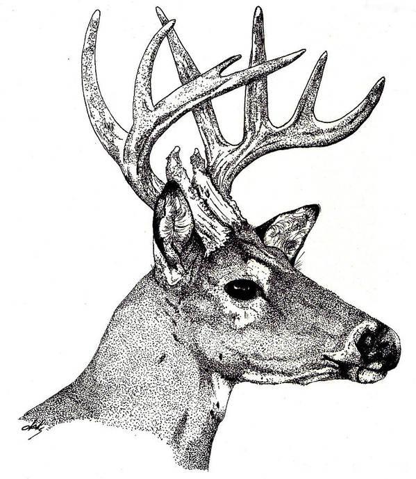 Deer Poster featuring the drawing Ten Point Buck by Debra Sandstrom