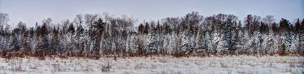 Background Poster featuring the photograph Snow Tree Line by Gary Gish