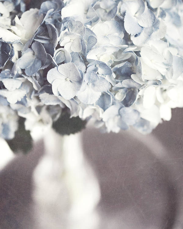 Hydrangea Poster featuring the photograph Bella Donna by Lisa Russo