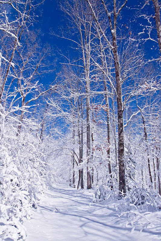 Forest Paths Poster featuring the photograph Snowy Path by Rob Travis