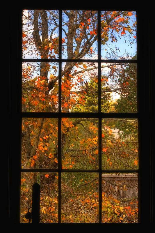 Autumn Poster featuring the photograph Autumn's Palette by Joann Vitali