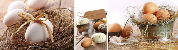 Background Poster featuring the photograph Collage Of Assorted Egg Images by Sandra Cunningham