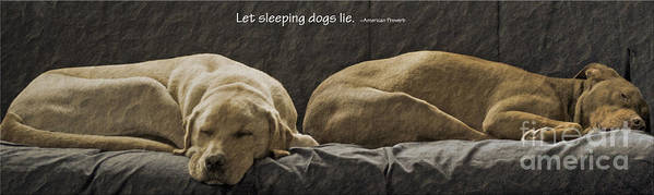 Sleeping Dogs Poster featuring the photograph Let Sleeping Dogs Lie by Gwyn Newcombe