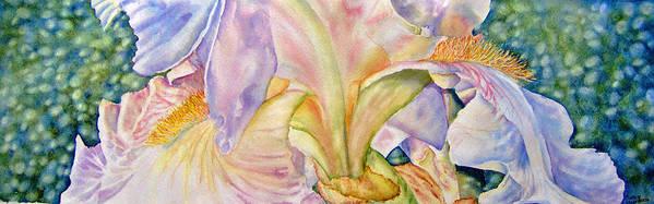 White Iris Poster featuring the painting Carols-iris-ii by Nancy Newman