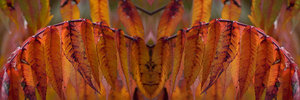 Floral Poster featuring the photograph Autumn Leaves 03 Mirror Image by Thomas Woolworth