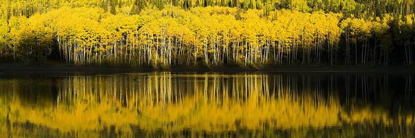 Fall Poster featuring the photograph Golden Lake by Chad Dutson