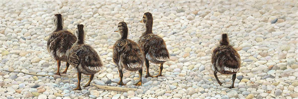 Ducklings Poster featuring the painting Just Waddling by Tammy Taylor