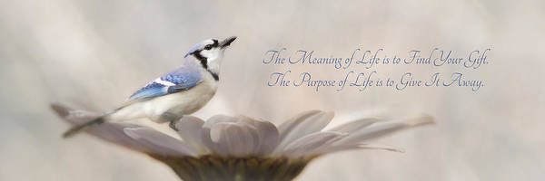 Blue Poster featuring the photograph The Meaning Of Life by Lori Deiter