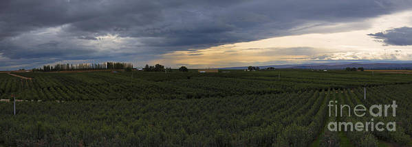 Orchard Poster featuring the photograph Storm Over The Yakima Valley by Mike Dawson