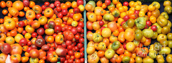 Tomato Poster featuring the photograph A Variety Of Fresh Tomatoes - 5d17904-long by Wingsdomain Art and Photography