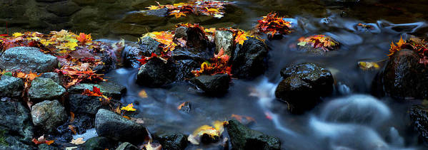 Landscape Poster featuring the photograph Maple Leaves-0002 by Sean Shaw