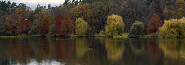 Landscape Poster featuring the photograph Autumnal by Mihail Antonio Andrei