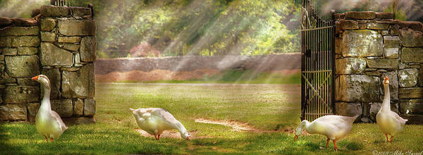 Savad Poster featuring the photograph Farm - Geese - Birds Of A Feather - Panorama by Mike Savad