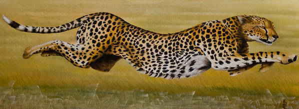 Cheetah Flying Run Speed Stretch Chase Poster featuring the painting Frozen At Full Charge by Pauline Sharp