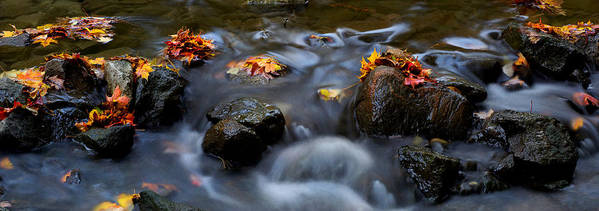 Landscape Poster featuring the photograph Maple Leaves-0003 by Sean Shaw