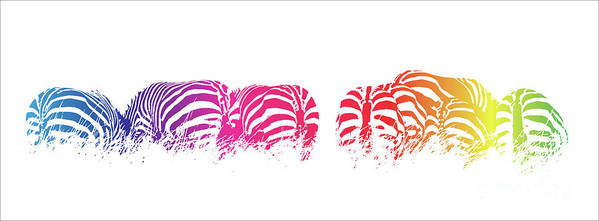 Zebra Poster featuring the photograph Rainbow Zebras by Jane Rix