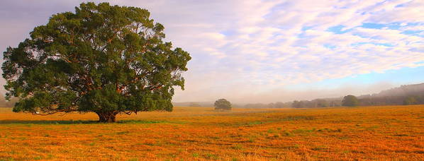 Landscape Poster featuring the photograph Field Of Gold by Paul Riemer
