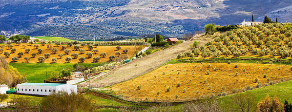 Andalucia Poster featuring the photograph Andalusia Countryside Panorama by Artur Bogacki
