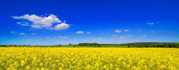 Summer Poster featuring the photograph Summer Field by Amanda Elwell