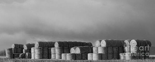 Hay Poster featuring the photograph Stacked Round Hay Bales Bw Panorama by James BO Insogna
