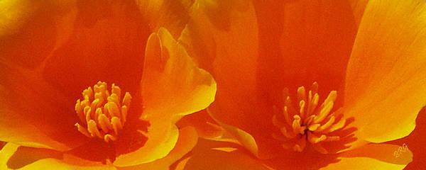 California Poppies Poster featuring the photograph Wild Poppies by Ben and Raisa Gertsberg