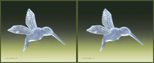 3d Poster featuring the photograph Hummingbird - Gently Cross Your Eyes And Focus On The Middle Image by Brian Wallace