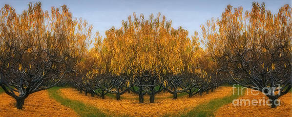 Apple Orchard Poster featuring the photograph Which Way by Susan Candelario