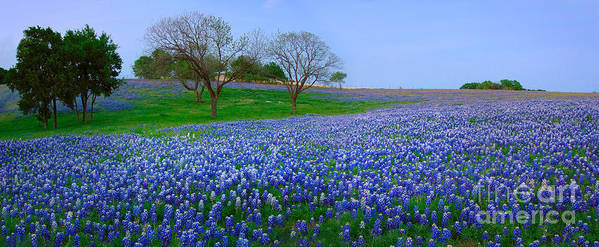 Spring Poster featuring the photograph Bluebonnet Vista - Texas Bluebonnet Wildflowers Landscape Flowers by Jon Holiday