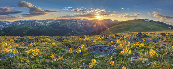 Colorado Wildflowers Poster featuring the photograph Rocky Mountain National Park Summer Sunflowers Pano 1 by Rob Greebon