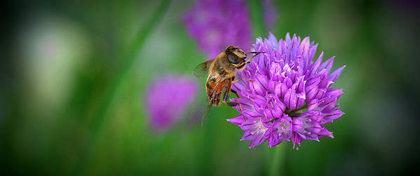 Flower Poster featuring the photograph Bee by Rob Andrus