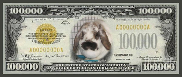 Money Poster featuring the photograph Bunny Money by Renee Trenholm