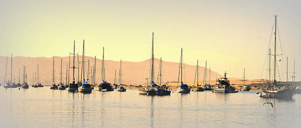 Boats In Harbor Poster featuring the photograph Moorings by Fraida Gutovich