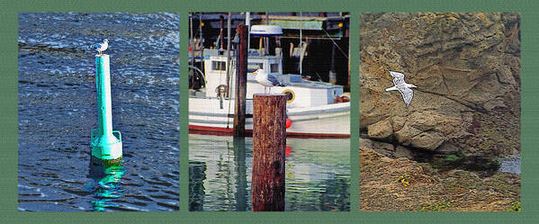 Seagull Poster featuring the photograph Seagull Triptych by Steve Ohlsen