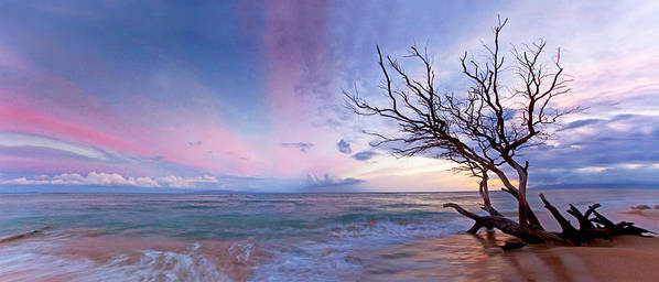 Maui Hawaii Ukemehame Dead Tree Seascape Sunset Poster featuring the photograph The Old Tree by James Roemmling