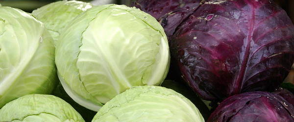 Vegetable Poster featuring the photograph Cabbage Heads by Sonja Anderson