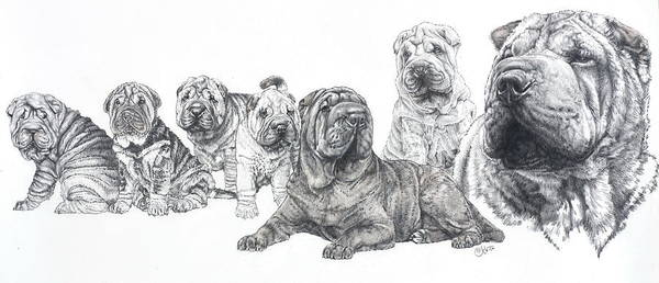Non-sporting Group Poster featuring the drawing Growing Up Chinese Shar-pei by Barbara Keith