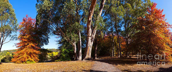 Mt Lofty Botanical Gardens Adelaide Hill Adelaide South Australia Landscape Pano Panorama Panoramic Australian Autumn Gum Trees Poster featuring the photograph Mt Lofty Botanical Gardens by Bill Robinson