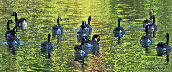 Geese Poster featuring the digital art On Golden Pond by DigiArt Diaries by Vicky B Fuller